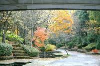 錦繍の森2010-22