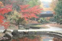 錦繍の森2010-20