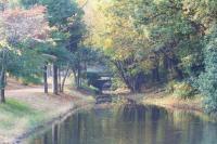 錦繍の森2010-28