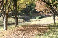 錦繍の森2010-27