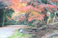 錦繍の森2010-25