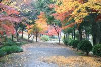 錦繍の森2010-26