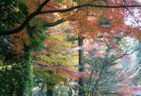 錦繍の森2010-30