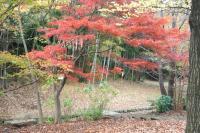 錦繍の森2010-36
