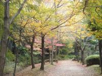 錦繍の森2010-35