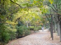 錦繍の森2010-34