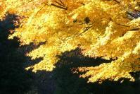 錦繍の森2010-33