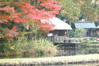 錦繍の森2010-43