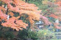 錦繍の森2010-42