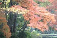 錦繍の森2010-41