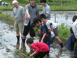2012.05.12おやじ田植 3