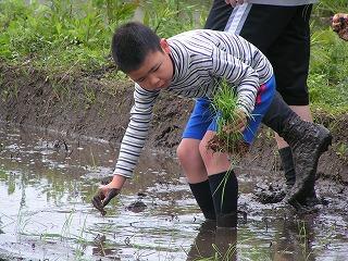 2012.05.12おやじ田植 8