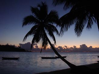 縮小版椰子の木1