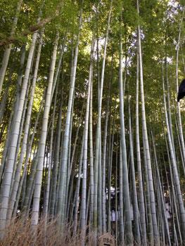 131114 京都伝統産業青年会展8