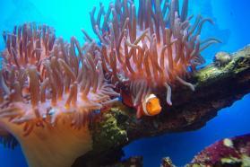 親魚20100908