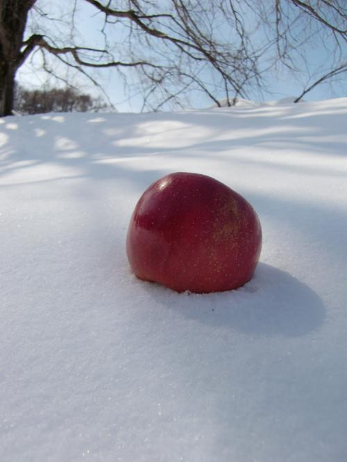 雪ロケ15
