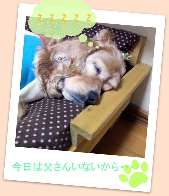 ベットの小太郎-001
