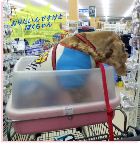 お買い物3
