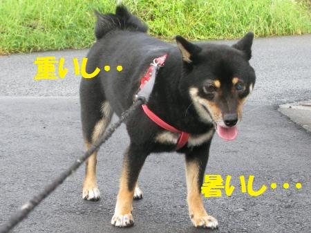 002_convert_20110902164831.jpg