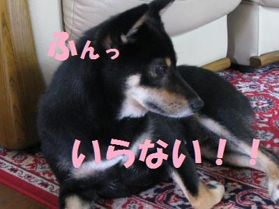 003_convert_20110728153229.jpg