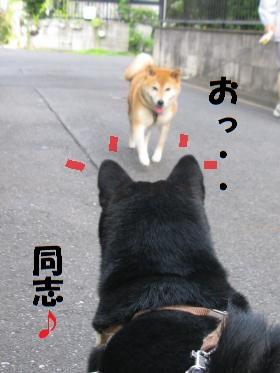 005_convert_20110829132604.jpg