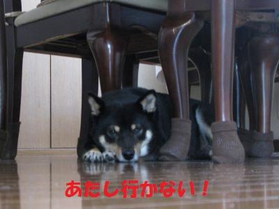 007_convert_20110528112234_20110528121112.jpg
