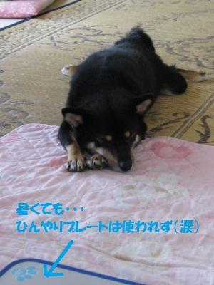 009_convert_20110705144651.jpg