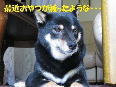 009_convert_20110830164737.jpg