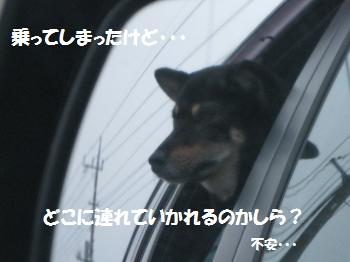 016_convert_20110627115211_20110627123330.jpg