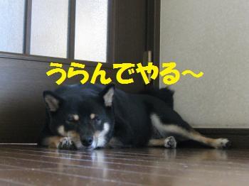 020_convert_20110830164837.jpg
