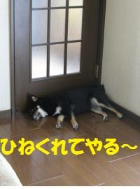 021_convert_20110830165005.jpg