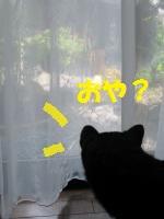 022_convert_20110814154106.jpg