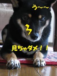 025_convert_20110824104043.jpg