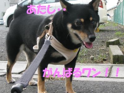 031_convert_20110903123926.jpg