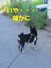 033_convert_20110720101206.jpg