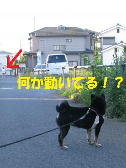 034_convert_20110720130628.jpg