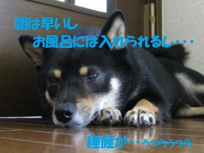 036_convert_20110716123944.jpg