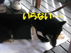 048_convert_20110920161745.jpg