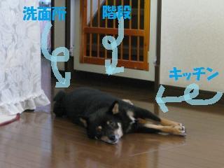 082_convert_20110711114826_20110711121254.jpg