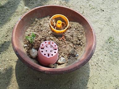 1トマトの花3