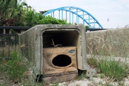 旧猫BOXin猫島