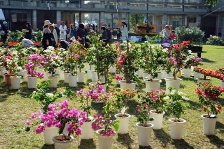 鉢植え花の販売