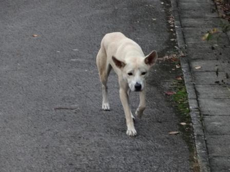 DSC02608 - 迷い犬