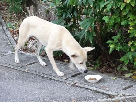 DSC02609 - 迷い犬