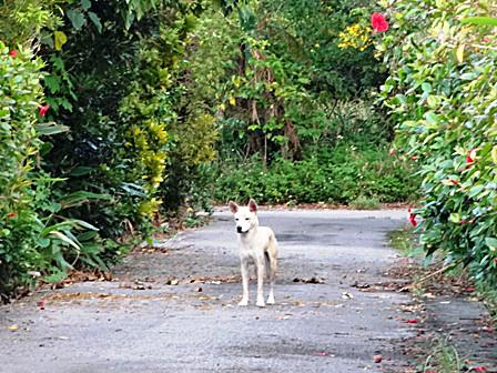 DSC02615 - 迷い犬