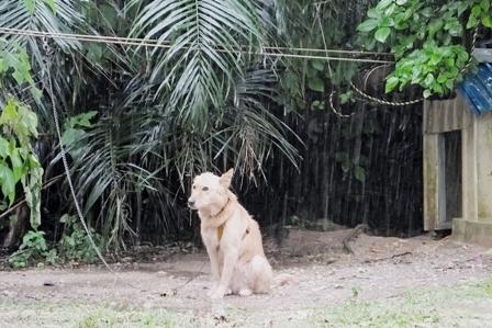 雨中のクリ