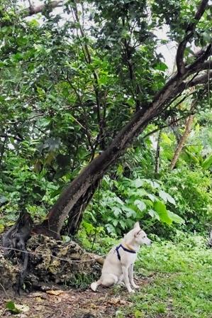 雨の木下のユキ