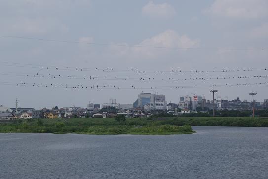 電線に鳥・鳥・鳥