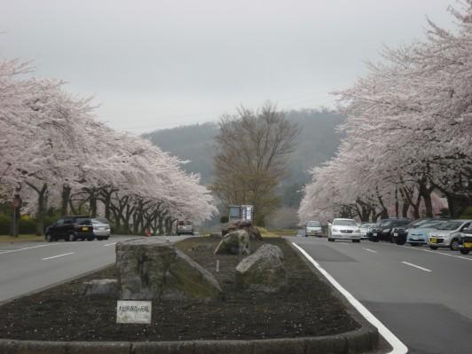 23.4.21テニ友と富士霊園 060_ks