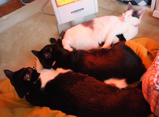 3猫むぎゅむぎゅ